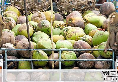 ココナツ収穫にサル、「虐待だ」 英で関連製品販売中止:朝日新聞デジタル