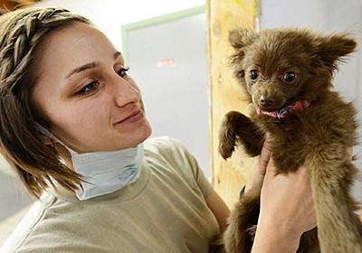 動物病院の売上。統計データから導く数字と、現実の差が語るもの ~犬猫の飼い主が見た、加計学園問題(その3)~ - 犬を飼うということ