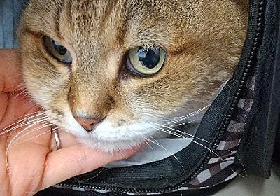 ぷーちゃん、無事に戻りました。 - 猫とわたしの気まま日記。
