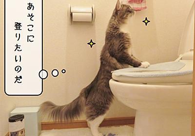 猫雑記 ~むくのお手伝い業務~ - 猫と雀と熱帯魚
