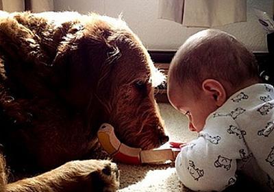 問題行動のある犬が、ある家族に迎え入れられ赤ちゃんのベストフレンドとなるまでの物語 : カラパイア