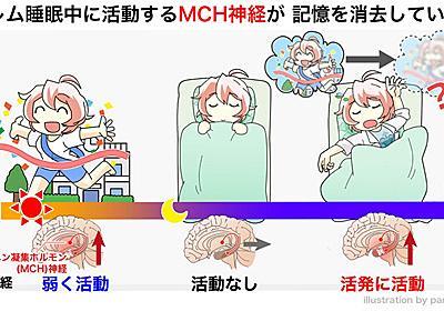 共同発表:浅い眠りで記憶が消去される仕組みを解明~なぜ夢は起きるとすぐに忘れてしまうのか~