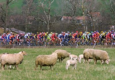 「羊のふん」で選手ら次々倒れる、ノルウェー自転車レース 写真1枚 国際ニュース:AFPBB News