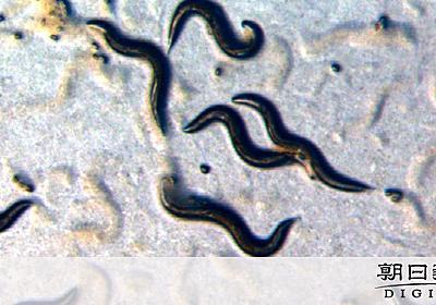 老いるほど内から輝く? 生物が放つ「加齢光」を発見:朝日新聞デジタル