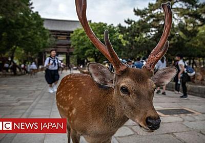 奈良のシカ、レジ袋を食べて死亡 過去4カ月で9頭 - BBCニュース