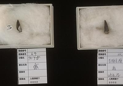 """林 智裕 on Twitter: """"福島で発見されたクビナガリュウの化石の展示を見てるけど、採集者……。(´・ω・`) https://t.co/yDbM3KH1jp"""""""