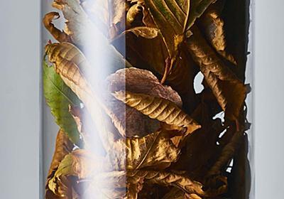 「円筒の被写体」の正しいハイライトの入れ方。(落ち葉の塔) | 使える機材 Blog!