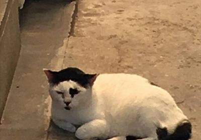 """珍スポ太郎 on Twitter: """"ゴー☆ジャスみたいな猫いた https://t.co/eDFvYE1CH7"""""""