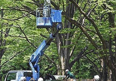 五輪中止を求める声が高まる中…パブリックビューイングのために代々木公園の樹木を剪定!? ネットで反対広がる:東京新聞 TOKYO Web
