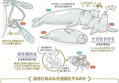 自己中な生き物、迷惑な子作り行動 精液に毒…競争過激:朝日新聞デジタル
