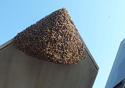 CNN.co.jp : F22に2万匹のミツバチ群がる、飛行できず - (1/2)
