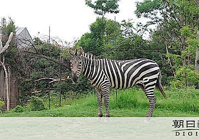 天王寺動物園の「ヒデヨシ」死ぬ けんかで腹刺される:朝日新聞デジタル