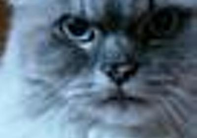 "catu on Twitter: ""「グラゼニ」「江川と西本」原作の森高夕次先生と「おれはキャプテン」「チェイサー」のコージィ城倉先生が同一人物だという事実を、今回の「キャプテン」続編のニュースで初めて知っている人が結構いるな。"""