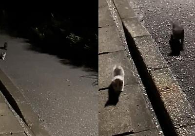 「後ろから誰かついてくると思ったら子猫だった」 夜道で保護された子猫の姿に思わず涙がこぼれる - ねとらぼ