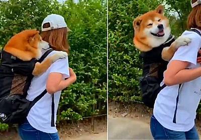 災害時の愛犬のために買ったリュック 飼い主さんのオンブで移動する柴犬がかわいい - ねとらぼ