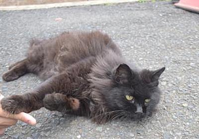 【茨城新聞】駅猫「おさむ」天国へ ひたちなか海浜鉄道