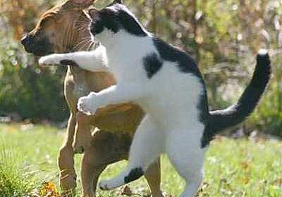 夫婦喧嘩は犬も食わない - 『かなり』
