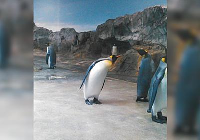 私的水族館ランク分けが興味深い…S「ここのために行く価値がある」A「旅行の目玉になる」B「展示が面白いので寄りたい」C「やや物足りない」 - Togetter