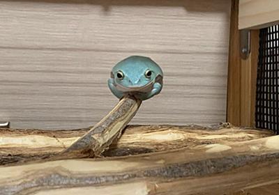 「なぜそんなところに…」枝の先端にチョコンと乗ってるカエル、あまりにもかわいすぎる「絵画のよう」 - Togetter