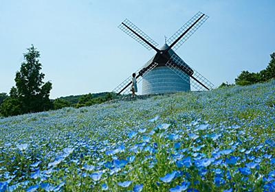 ジブリのヒロイン気分♪ ネモフィラの咲くメルヘンな風車の丘 | あすたむらんど徳島 - City's Pride