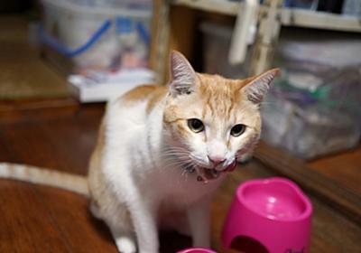 猫撮影にはこれしかない!Xmasイブに最大の覚悟でポチしちゃったα6600   猫小との生活
