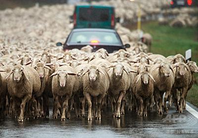 羊が道路を「占拠」 ドイツ南部 写真2枚 国際ニュース:AFPBB News