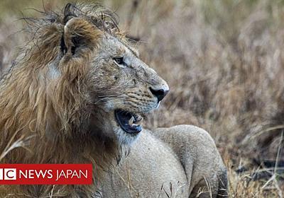 密猟者、ゾウに殺された後ライオンに食べられる 南ア - BBCニュース