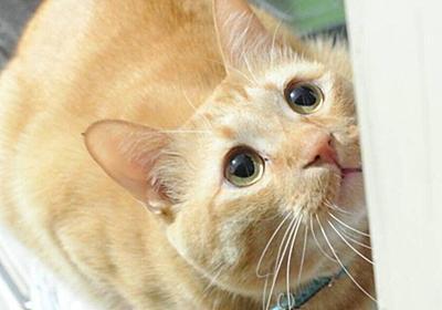 食器洗い→おやつの流れを覚えた猫さんによる催促と『おやつもらってないです詐欺』がかわいい「猫ってなんであんなに貰ってないフリ上手なんでしょうね…」 - Togetter