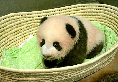 上野パンダ:名前はシャンシャン(香香) - 毎日新聞