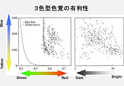 第4回 なぜ霊長類はまた3色型色覚を獲得したのか | ナショナルジオグラフィック日本版サイト