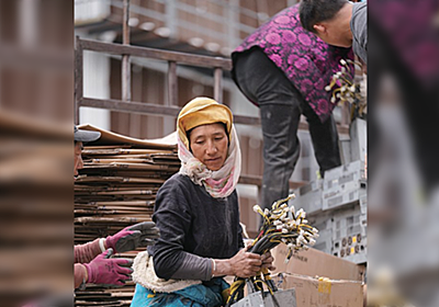 「中国でマイニング機器撤去作業中のチベットの女性」の写真が「花を摘む婦人」に見えると話題になりNTFアート化したものが約40万円で売られている - Togetter