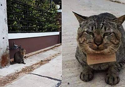 3日間失踪していたネコが「借金」を抱えて帰宅する珍事が発生 - GIGAZINE