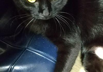 カバンの上で | オカキとアラレの黒猫ブログ