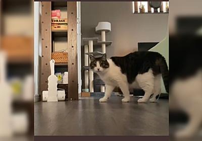 人間の姿が見えなくなると猫さんが『ぬいぐるみを咥えて大声で鳴く』隠し撮りに成功→うちの子もやる!の声続出