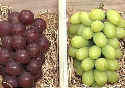 """【独自】日本の高級ブドウなぜ""""韓国産""""? 無断栽培か 直撃に「大目に見て」"""