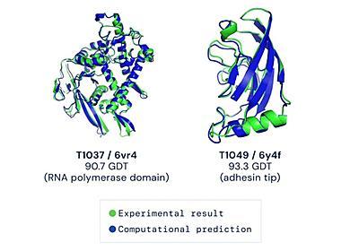 """「6年解けなかった構造があっさり」──タンパク質の""""形""""を予測する「AlphaFold2」の衝撃 GitHubで公開、誰でも利用可能に - ITmedia NEWS"""
