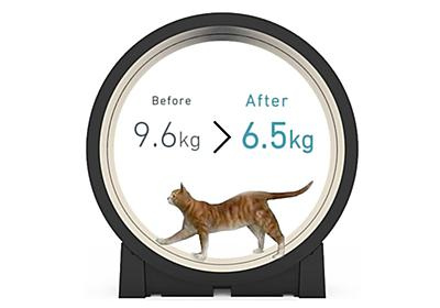 怠け猫の運動不足解消に。スマート回し車「The Little Cat」発表、スマホで運動量確認、スケジュール管理も - Engadget 日本版