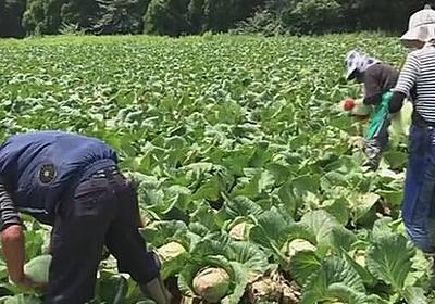 観光業界の人を農業現場で受け入れへ JA全農とJTBが提携 | 新型コロナ 経済影響 | NHKニュース