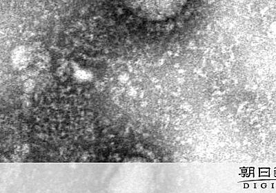 中国、医療関係者1716人が感染 深刻な院内感染発生 [新型肺炎・コロナウイルス]:朝日新聞デジタル