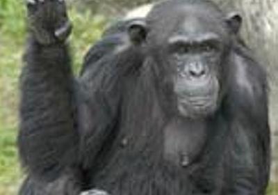 やっぱりポモは滅ぼされねばならぬ - apesnotmonkeysの日記