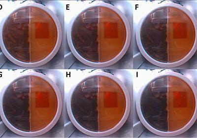「チェルノブイリのカビ」が飛行士を宇宙放射線から守る?火星基地にも活用の可能性 - Engadget 日本版