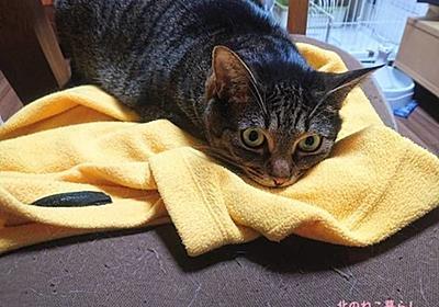 猫たちの寝床ジプシーが始まる【初夏・北海道】 - 北のねこ暮らし