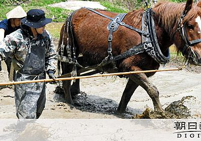馬と田んぼを往復、トラクターはやめた 棚田の未来に「新たな物語」:朝日新聞デジタル