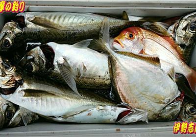 波切漁港の釣り師たち、老い崎の堤防で良型アジ、ヒラメ釣り釣り - 海釣(カイチョウ)倶楽部