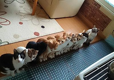 あっぱれ! ストーブ前できれいに整列する10匹の猫ちゃんズに寒さも吹っ飛ぶ - ねとらぼ