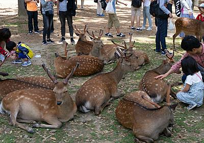 人間の存在によって野生の鹿の「警戒心」が崩壊しているという研究結果 - GIGAZINE