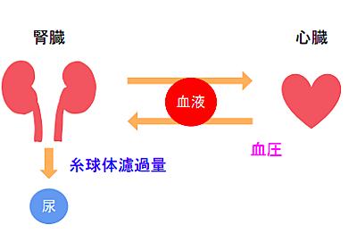 プロテインは腎臓にダメージを与える?〜ハーバード大学の見解と最新エビデンス - リハビリmemo