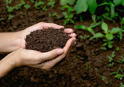 土に触れる生活が心身の健康につながる。抗ストレスの妙薬は「土壌」にあった:研究結果|WIRED.jp