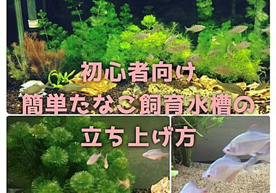 初心者向け簡単タナゴ飼育水槽の立ち上げ方 - たなごGo!
