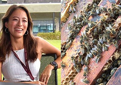 世界で急減のミツバチ、沖縄の女性研究者が解決に没頭 原動力はタトゥー刻むほどの愛:朝日新聞GLOBE+